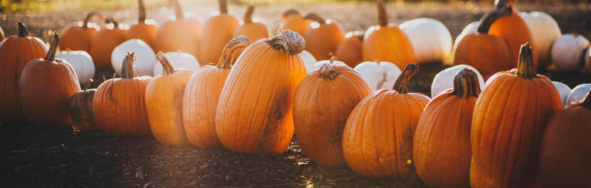11 Things We Love About Fall - Greenville Retirement