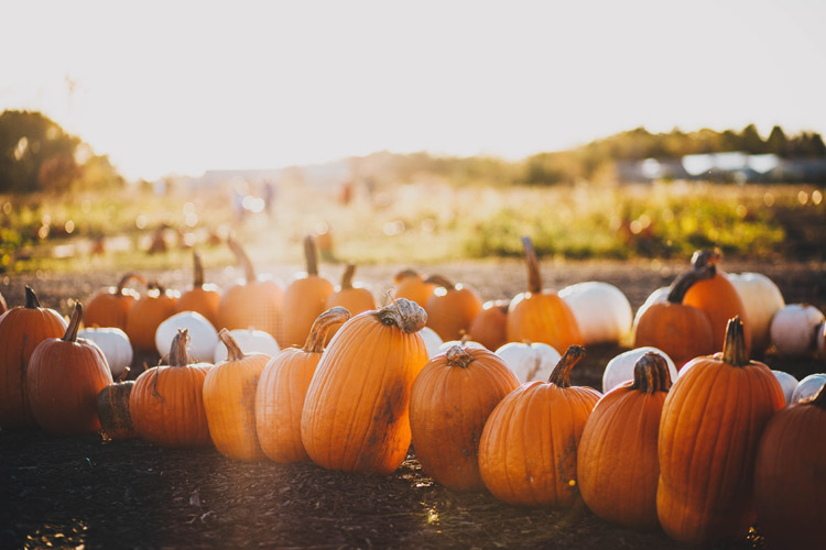 11 Things We Love About Fall